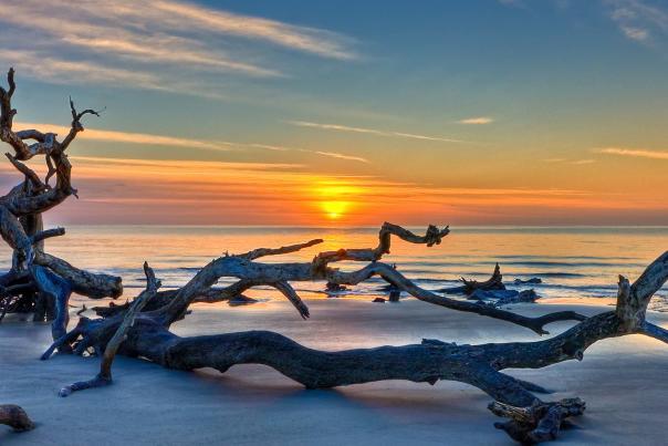 The sun rises over the Atlantic Ocean at Jekyll Island's famous Driftwood Beach