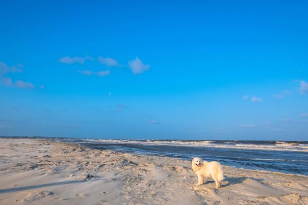 A playful dog enjoys the pet-friendly beaches on the Georgia Coast