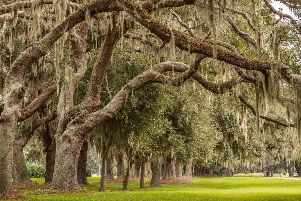 The Avenue of the Oaks is the iconic entrance to Sea Island Golf Club on St. Simons Island, GA