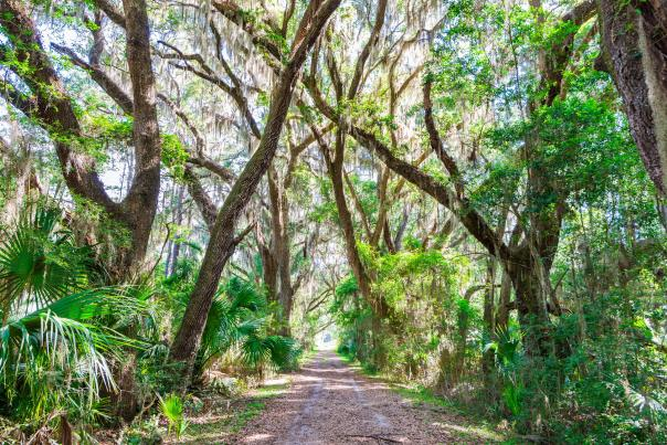 Scenic walking and hiking trails wind through an untouched maritime forest on St. Simons Island, GA