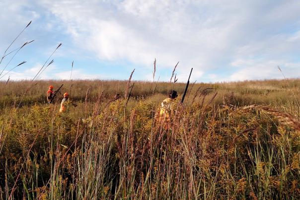 Hunting pheasants at Pine Hill Kennel & Sportsman's Club