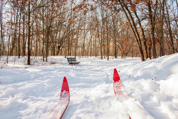BLOG - Cross Country Skiing