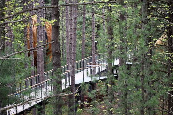 BLOG - Whiting Forest of Dow Gardens Canopy Walk