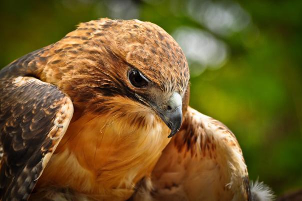 BLOG - Birding in Michigan's Great Lakes Bay