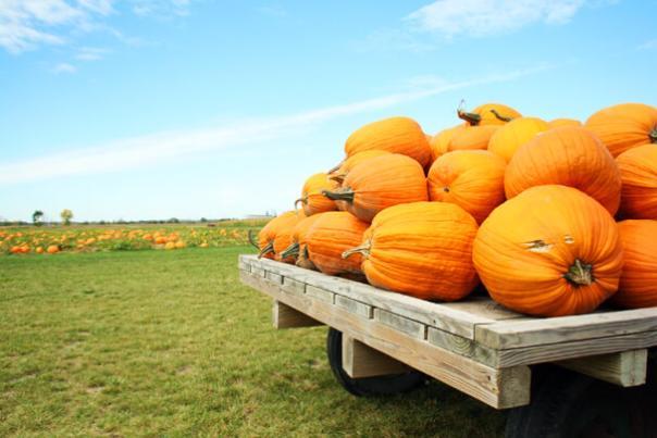 Johnson's Giant Pumpkin Farm - Optimized