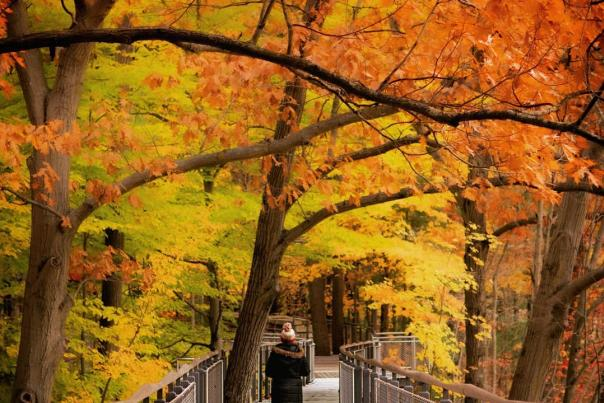 UGC - Seasonal - Fall - Outdoor Attractions - Whiting Forest of Dow Gardens