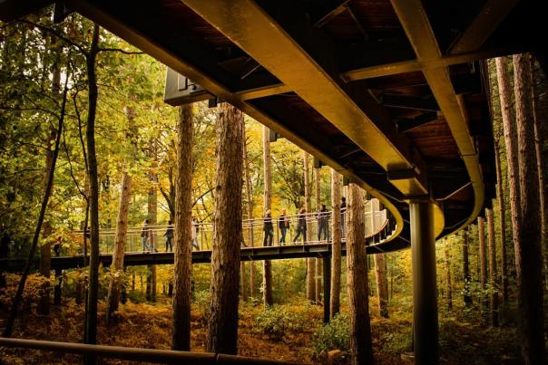 UGC - Outdoors - Attractions - Dow Gardens - Underside View of Canopy Walk - @blackmarkmedia
