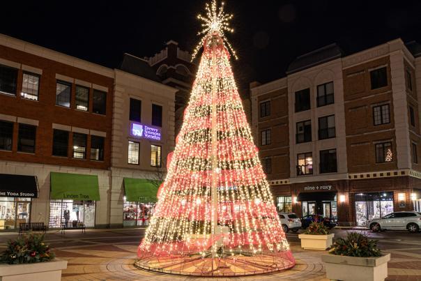 Carmel City Center Tree