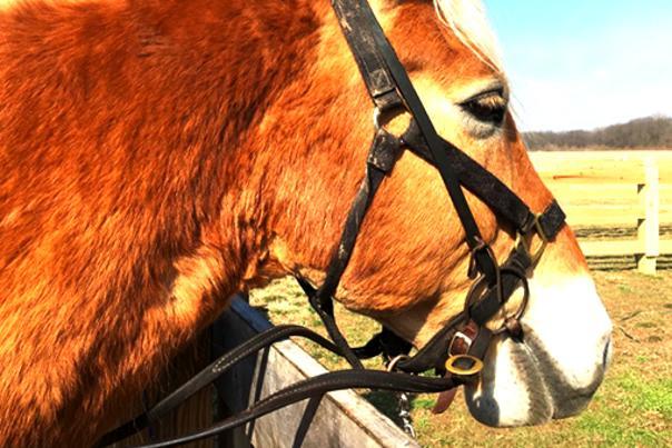 K-Trails horse