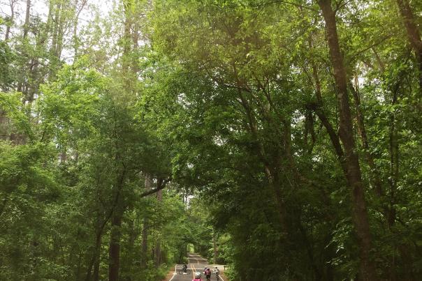 Yo Mariana in Trees