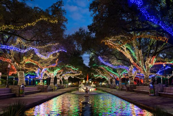 Trees with Christmas lights along a water feature in Houston