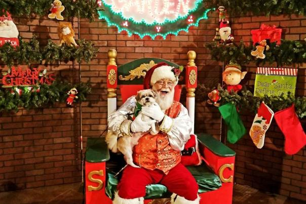 Christmas Dog Santa Bob Galaxy of LIghts