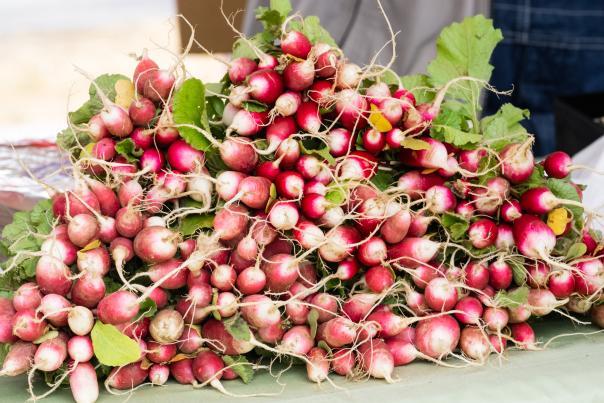 French-Breakfast-Madison-City-Farmers-Market-radish