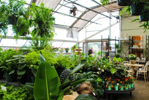 Indoor Plants Brooks & Collier
