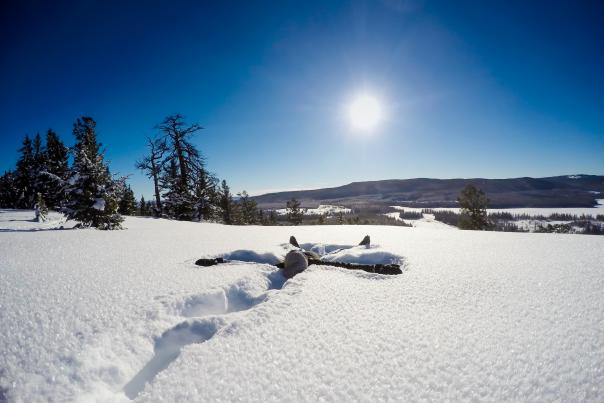 Person making a snow angel in the sun.