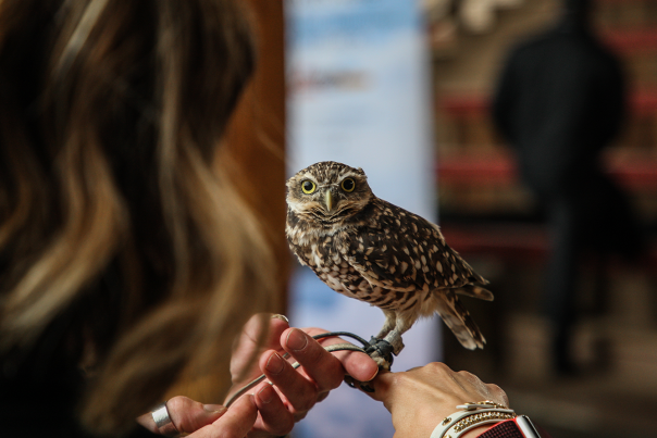 Burrowing Owl at the Wildlife Park