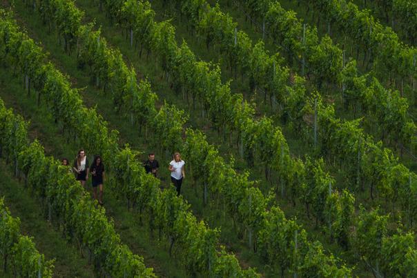 aerial of monte creek wine vineyard