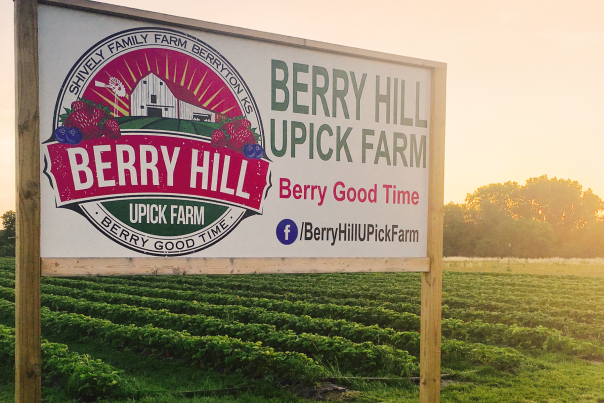 Berry_Hill_UPick_Farm