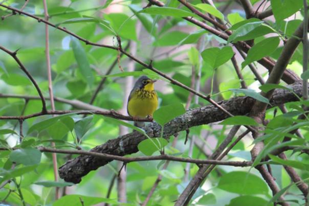 Swamp Birding Adventures in Southeast Kansas