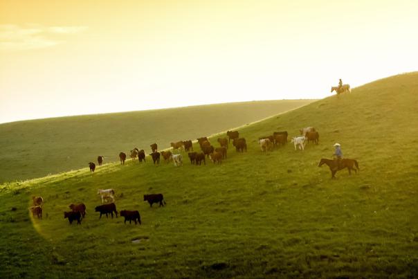 Flying W Ranch - Flint Hills Kansas - Chase County, KS