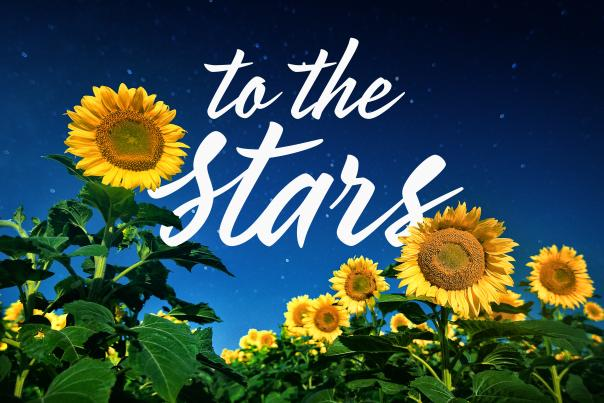 To the Stars Sunflowers
