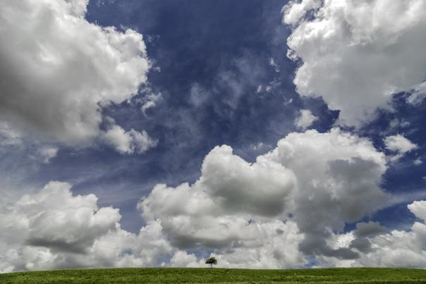 A long tree on a grassy plain with a blue sky and white clouds in Kansas