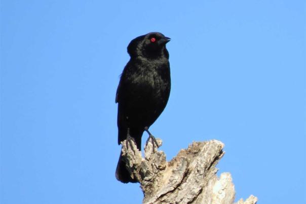 New Species of Bird in Kansas