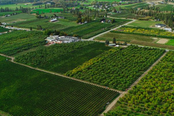 Orchards (Aerial)