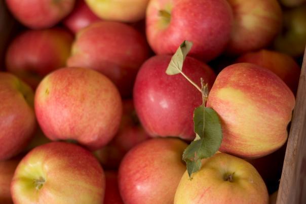 Kelowna Apples