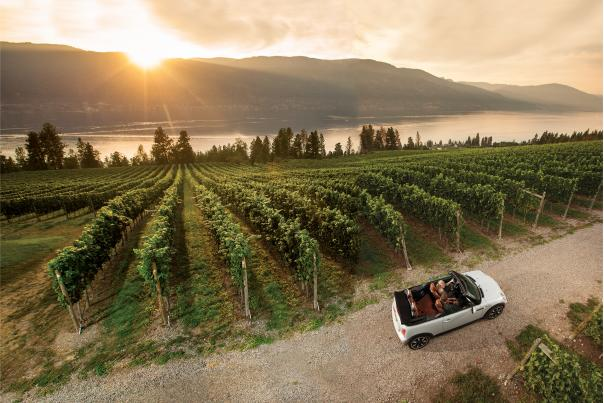 Kelowna and area wine country - Arrowleaf Vineyards