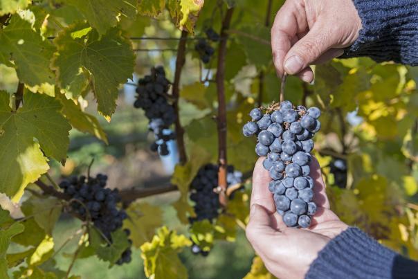 Indigenous World Winery