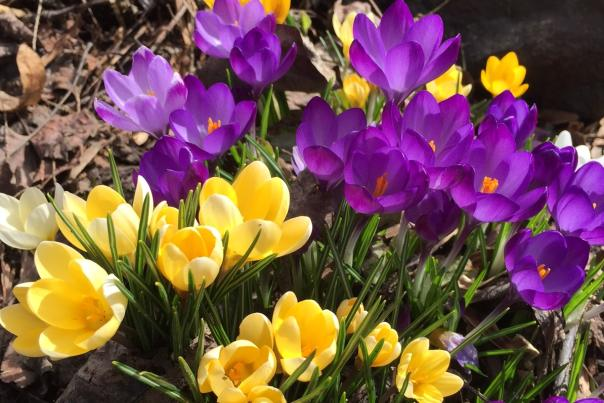 Flower Spring Kelowna
