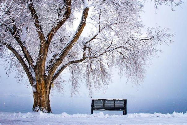 Snowy Lakeside Bench