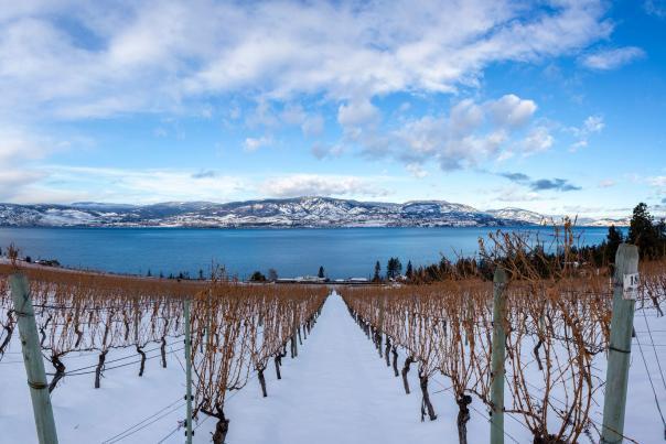 CedarCreek Estate Winery in Winter