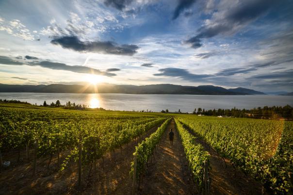 CedarCreek Winery Vineyard