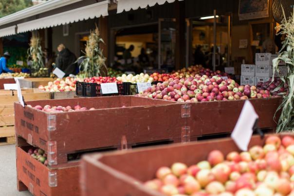 Paynter's Fruit Market - Fall Scene