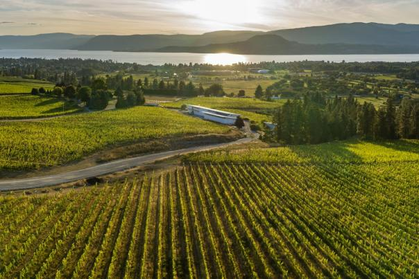 Tantalus Vineyard Aerial