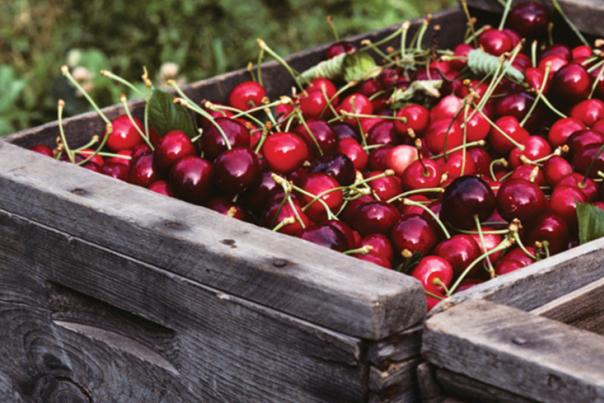 Cherry Bins