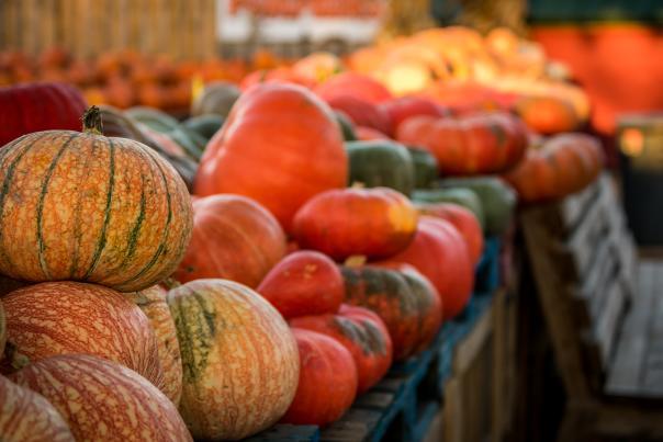pumpkins at Jerry Smith Farm