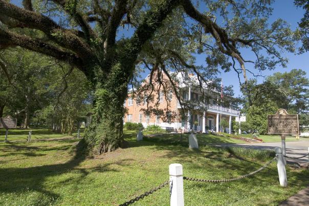Evangeline - Oak Tree, St. Martinville, Louisiana