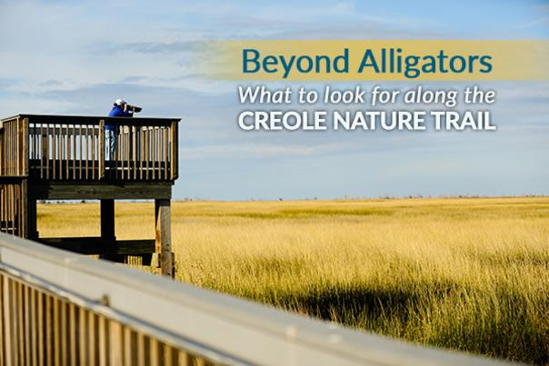 Beyond Alligators Blog Preview image