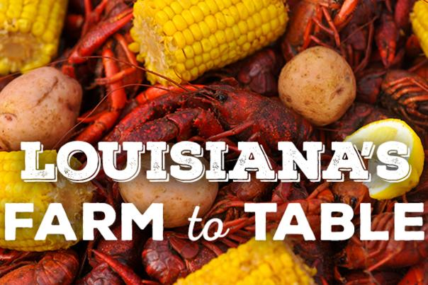 Crawfish Blog