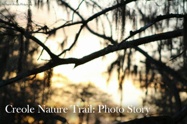 Creole Nature Trail: Photo Story