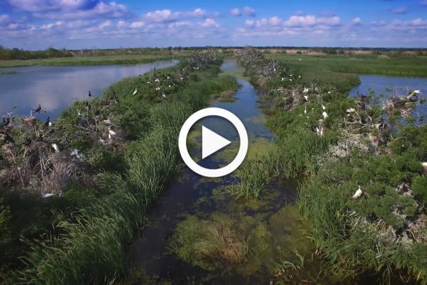 Creole Nature Trail Video Screenshot