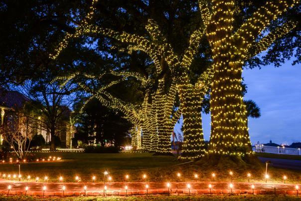 Shell Beach Drive Christmas Lights