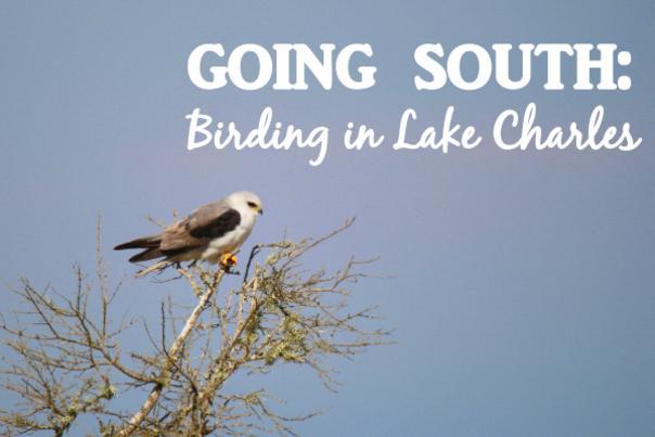 Birding Blog