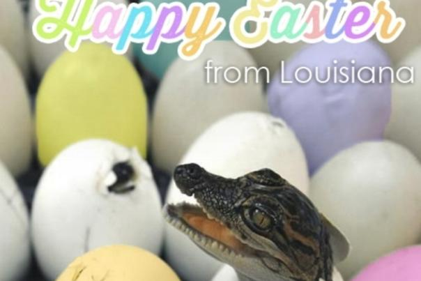 Happy Easter - Alligator
