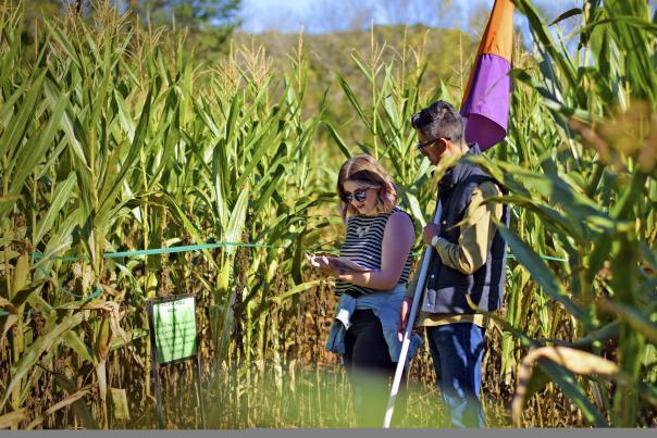 Amazing Maize Maze
