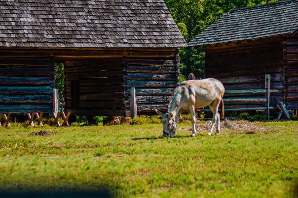 Horse at Historic Latta Plantation