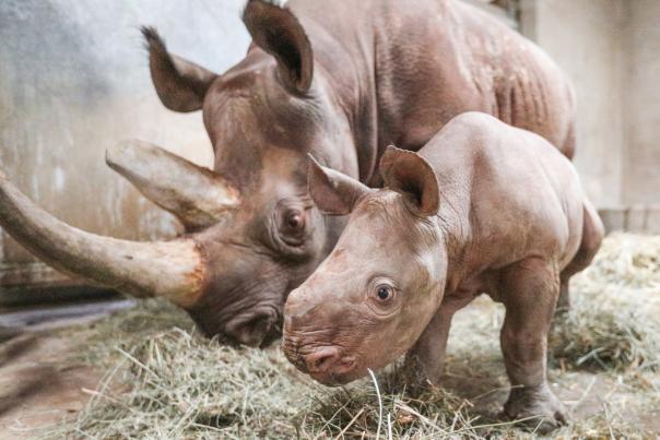 Potter Park Zoo - Rhino baby